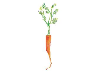 A cenoura